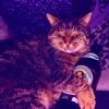 Billy The Cat (Sagler Waldschrei Mix)