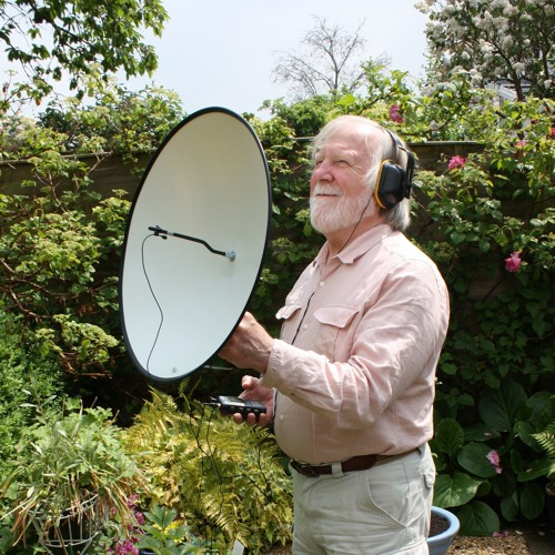 Parabolic Microphone (50cm dish with HMN Sound MicroLav) Various Birds.