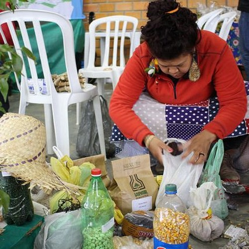 Curitiba recebe a 17º Jornada da Agroecologia com debates, feira e atrações culturais