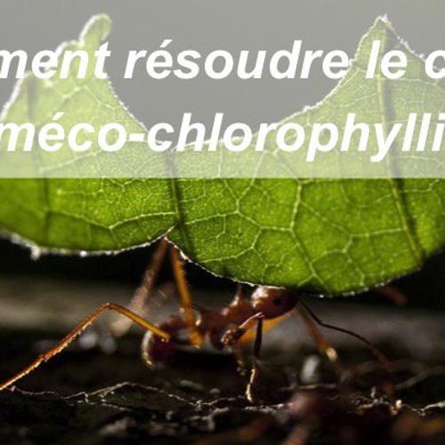 342 Le conflit myrméco-chlorophyllien