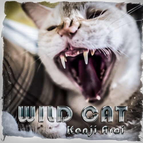 Kenji Arai - WILD CAT(feat.Mame Arai)