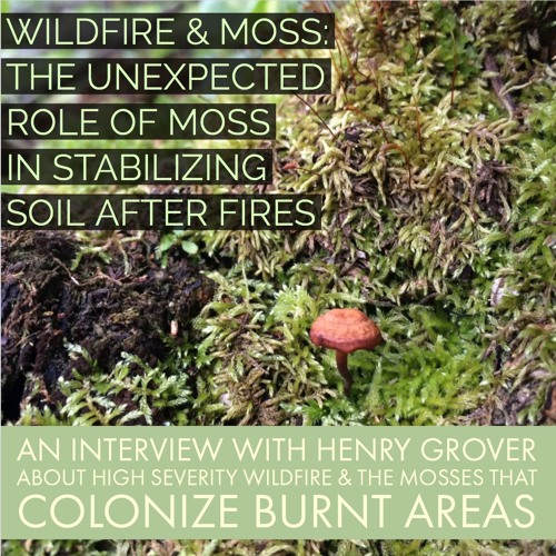 Wildfire and moss: the unexpected role of moss in stabilizing soil after fires