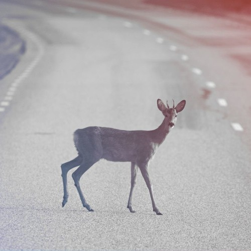 In Wyoming, A Solution To Wildlife Traffic Accidents May Be In The Bag