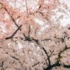 A Spring Without You (Original Mix)