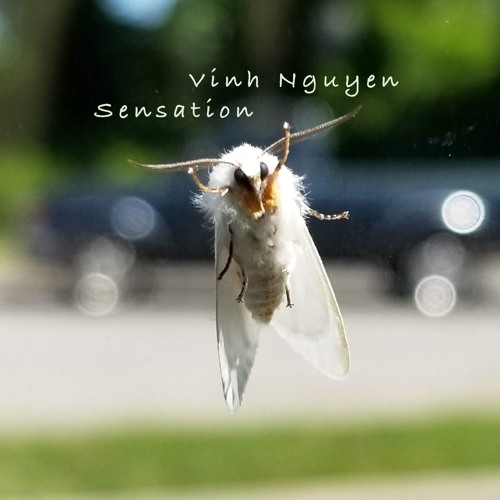 Sensation (Music Single - 320kbps - MP3) - Vinh Nguyen