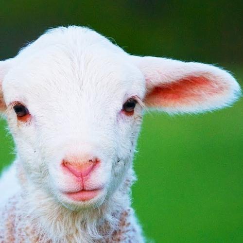Le Point Lexico : Revenons À Nos Moutons