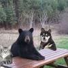 Black Bear Boogie/Bob Rutherford