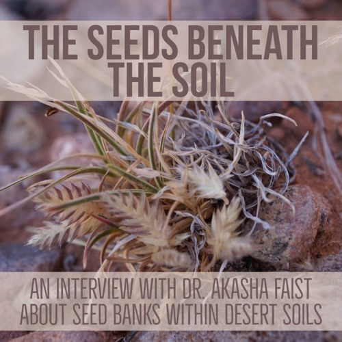 The seeds beneath the soil