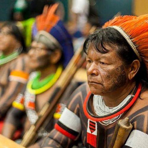 Temer corta bolsas de estudo de indígenas e quilombolas
