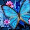 Butterfly Kisses  Bob Carlisle Cover By David Newton