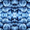 Blueberry I miss U