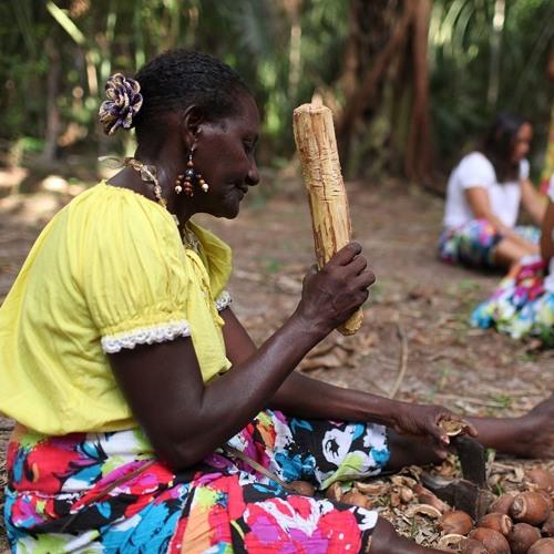Da casca a castanha: coco babaçu é fonte de renda para milhares de assentados no TO