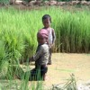 Child labour in agriculture on the rise, driven by conflict and disasters