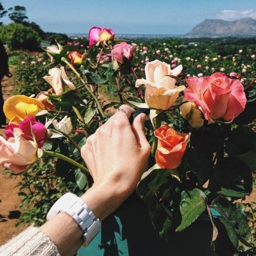 La Vie En Rose ( cover )