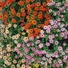 Bunga - Kugiran Masdo (Cover)