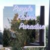 Purple Flower Paradise - Connor