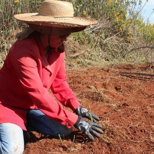 Cooperativa de mulheres em SP produz ervas medicinais orgânicas para remédios do SUS