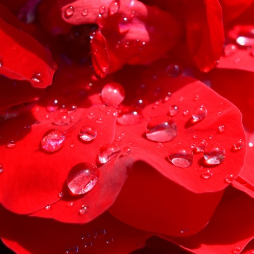 Goldene Engel - Blüten der Liebe