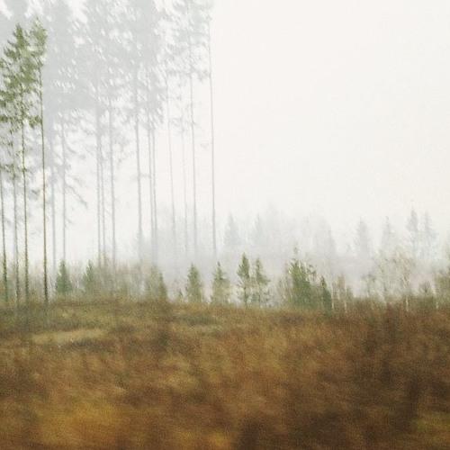 Tamhiis - Meil on elu keset metsa