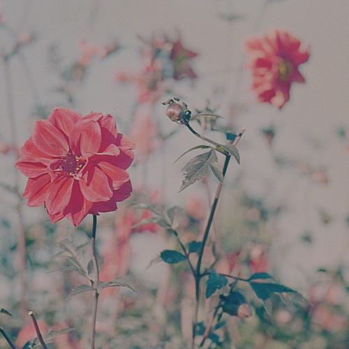 Suhen Kesä 2018 - Rakkauden kesä