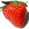 Loserfruit Trap Mix