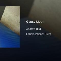 Gypsy Moth - Andrew Bird