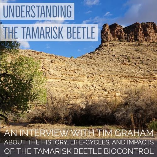 Understanding the tamarisk beetle