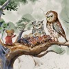 MR BROWN MOUSE & THE OWL BABIES