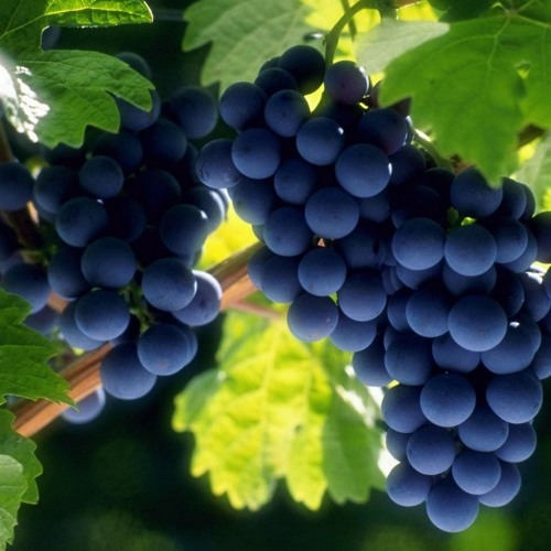 Pastor Brown 4 - 29 - 18 Message - Which grape will you add?