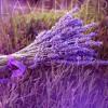 Lavender  -  Chill Hip Hop Beat