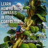 Learn How To Grow Cannabis In Your Coat Closet