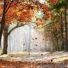Tejas Sharma - Falling Leaves
