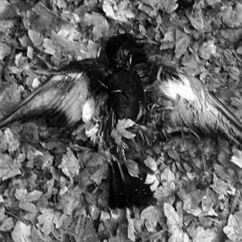 [KEEL139] Óraculum / Black Turmoil (excerpts)