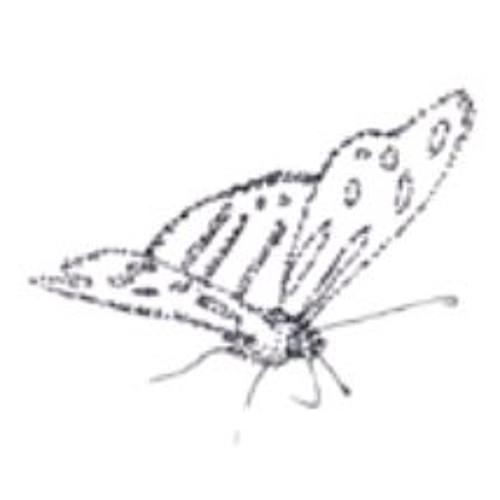 Butterfly movement II
