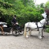 Wedding Horse drawn Carriages in UK | The Glorious Wedding Arrival