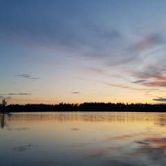 Black Throated Diver (Loon) - Sweden, Black River, April 2018