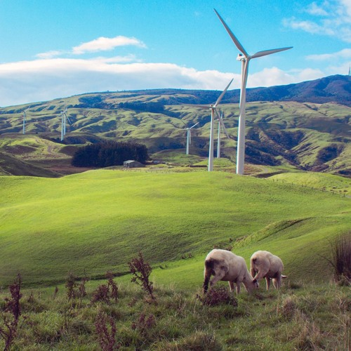 """Australia, New Zealand have """"green"""" policies but neither has reached its renewable-energy potential"""