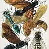 Insectos (ensayo) - (con desafinacion)(estas advertido)(lee la letra mientras la escuchas)