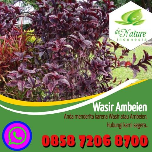Obat Wasir Herbal Semarang