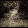 Path To Peace.mp3