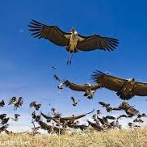 Flight Of Vultures