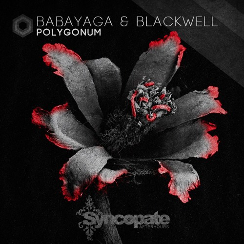 Polygonum - Babayaga Josh Blackwell