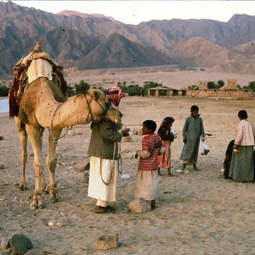 What we can all learn from the Bedouin (and Scots environmentalists)