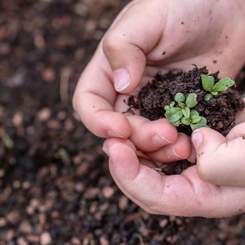 Crianças de assentamento da Reforma Agrária ajudam a reflorestar área