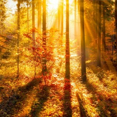 Relaxing Music for Stress Relief   Forest Voice   Music for Meditation, Healing Therapy, Sleep, Yoga
