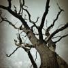 Shattered Cross (Stuart Adamson acoustic cover)