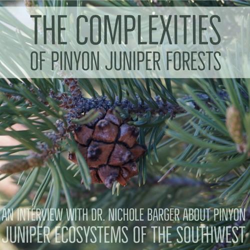The complexities of pinyon juniper woodlands