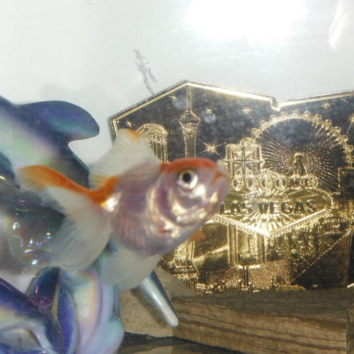 HAPPY FISH THE FRED AM I