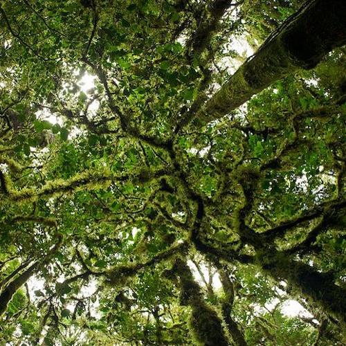 Canopy by Matthew Erpelding