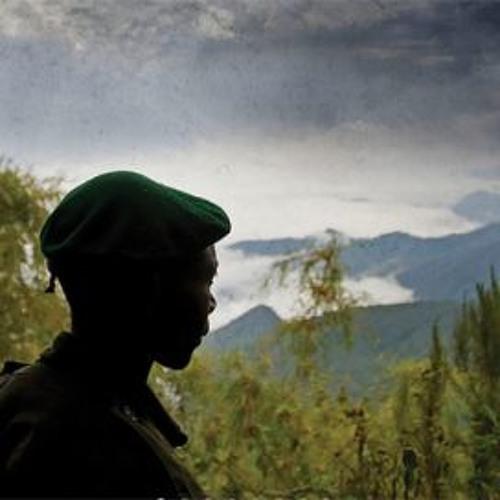 Bob Koigi: Profits before preservation: Who will save Congo's endangered biodiversity?